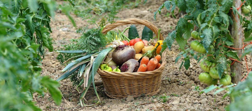 cultiver fruits et legumes