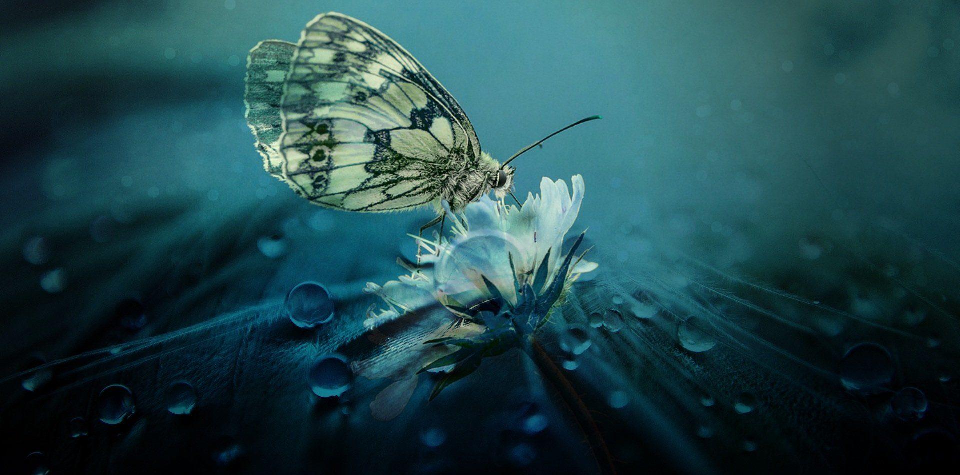 papillon ecologie animale