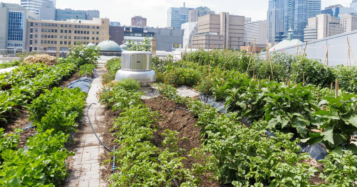cultiver sur son toit